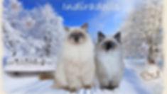 Winter_Indira_2018_edited.jpg