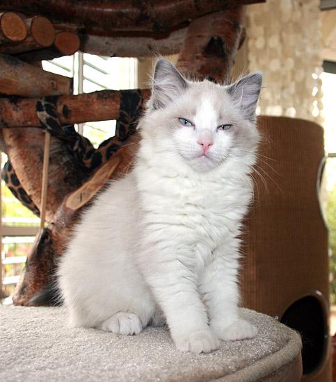 kitten-g4