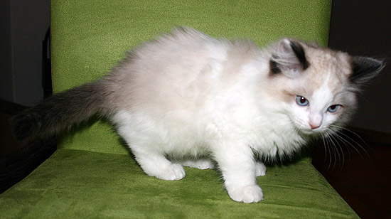 kitten-g2-2