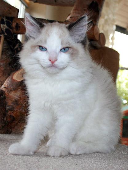 kitten-g2