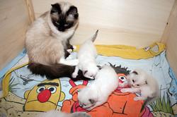 kitten-g6