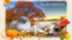 Herbst_2016.jpg