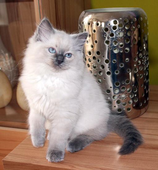 kitten-g3-2