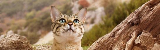 Wildes-Land-Katzenfutter-Uebersicht.jpg