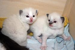 kitten-g5
