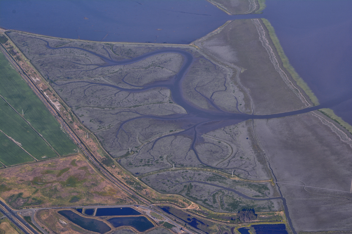 Rosemary Miklitsch River Delta