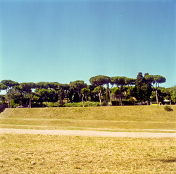 Trees in Rome, Italy - Emma Sywyj