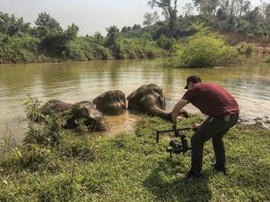 The Camera Loves Animals