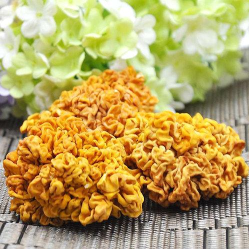 Yellow Fungus 黄耳