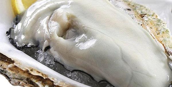 Frozen Half Shell Oyster 冷冻半壳牡蛎