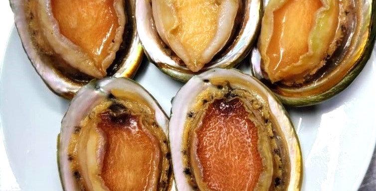 Frozen Half Shell Abalone 冷冻半壳鲍鱼 1KG/PKT