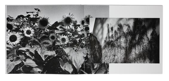 西村多美子 Tamiko Nishimura 続 (My Journey II. 1968-1989)(Zen Foto Gallery, 2020)