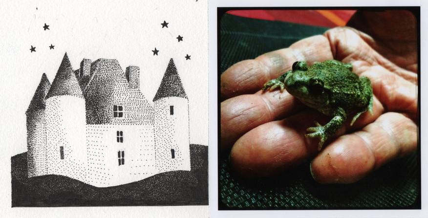 frog and kiss