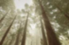 Peaceful-Forest-2-540x358.jpg