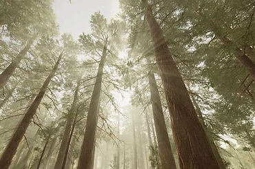 Peaceful-Forest-2-540x358.jpg