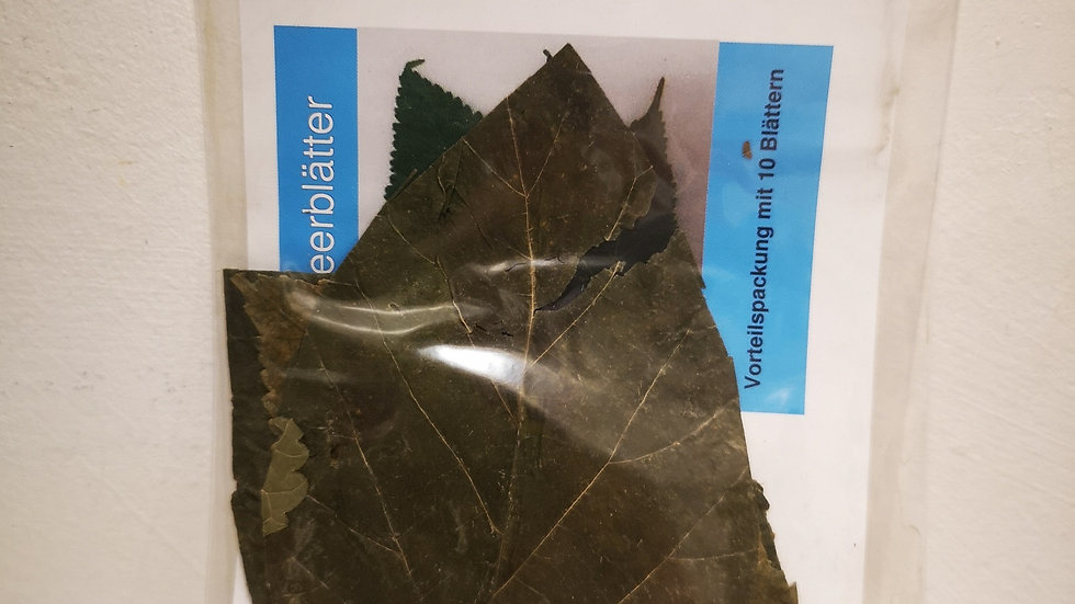 Mulberry leaves, 10 pieces