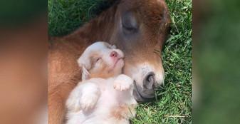 0d9d5be1-horse-puppy-snuggles-main.jpg