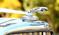Jaguar Leaper