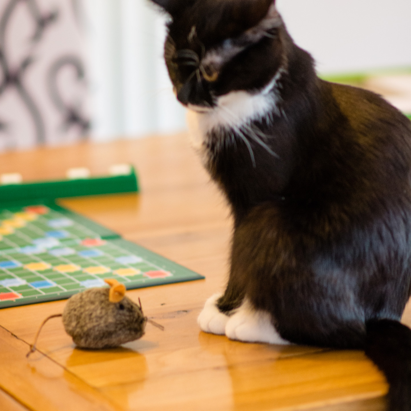 Pet Photographer Solihull, lifestyle photograph of a little cat sitting by a little mouse toy