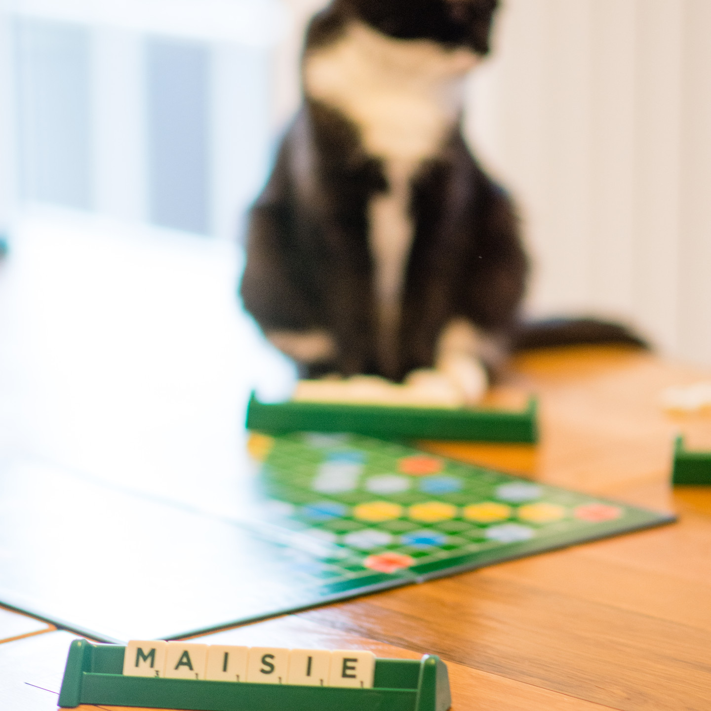 Lifestyle Photographer Solihull, Little cat sitting by the scrabble board