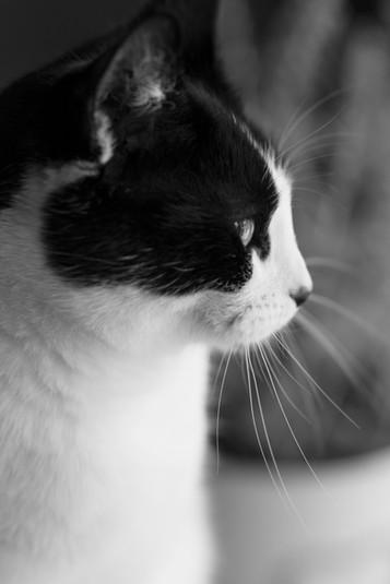 Pet Photographer Solihull