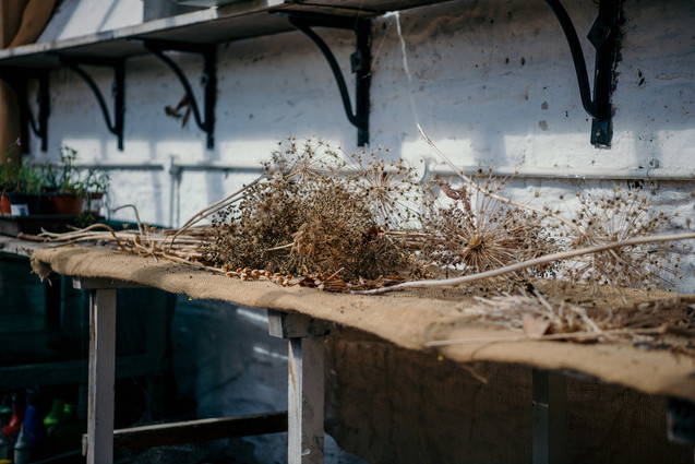 Photographer Wedding Birmingham, Dried flowers in the garden green house at the lord leycester warwick
