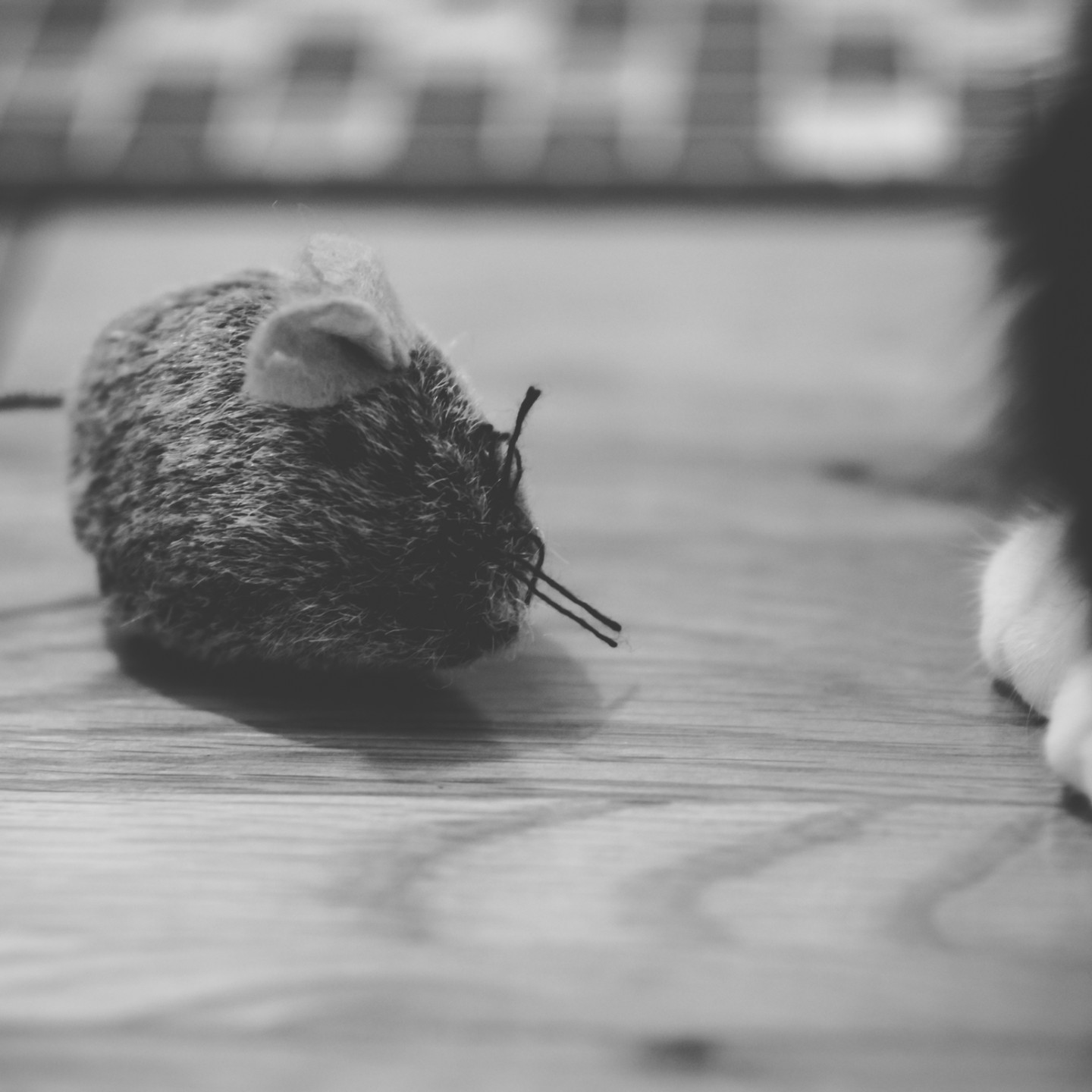 Pet Photographer Solihull, lifestyle photograph of a little cat, close up of her paws by a little mouse toy