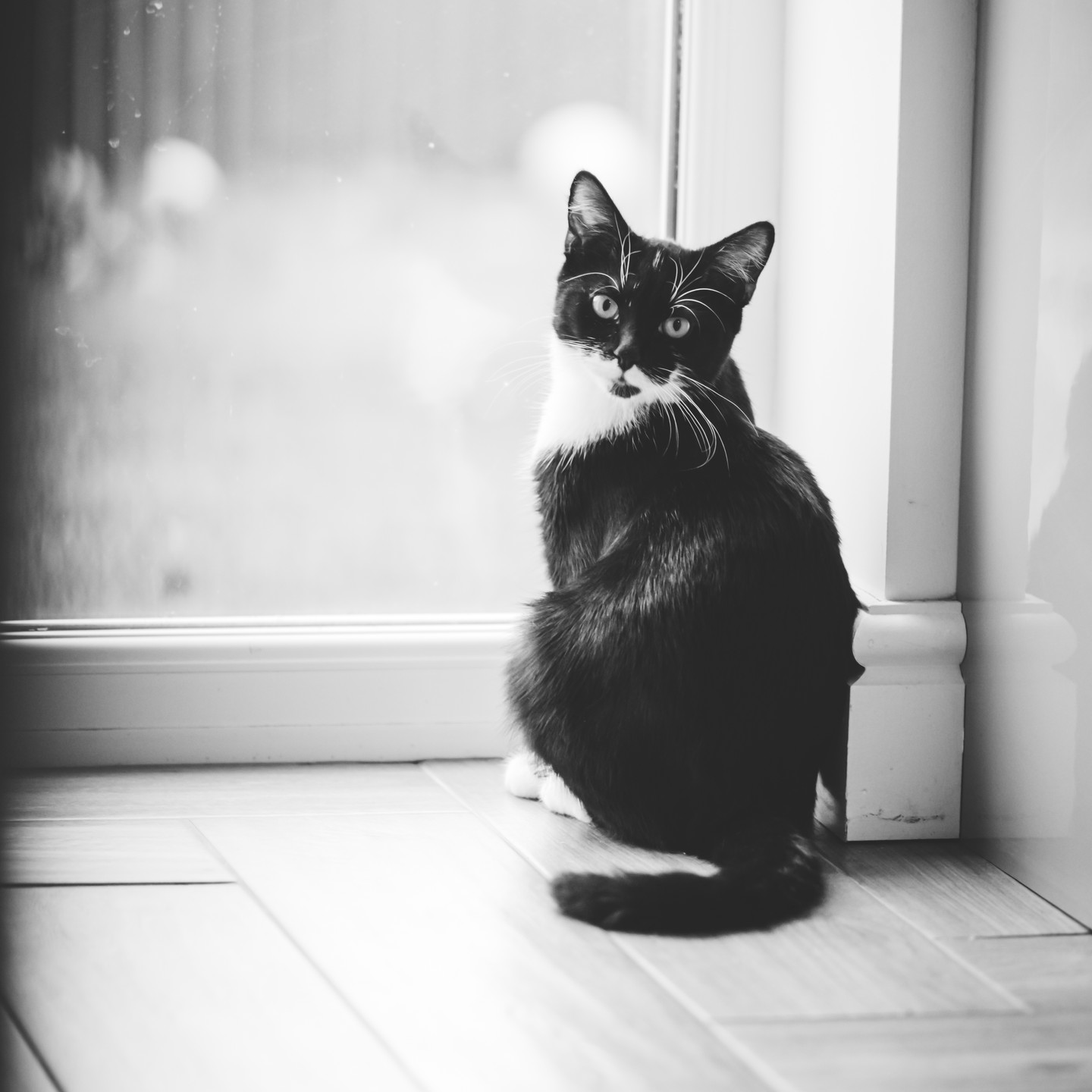 Pet Photographer Solihull, lifestyle photograph of a little cat