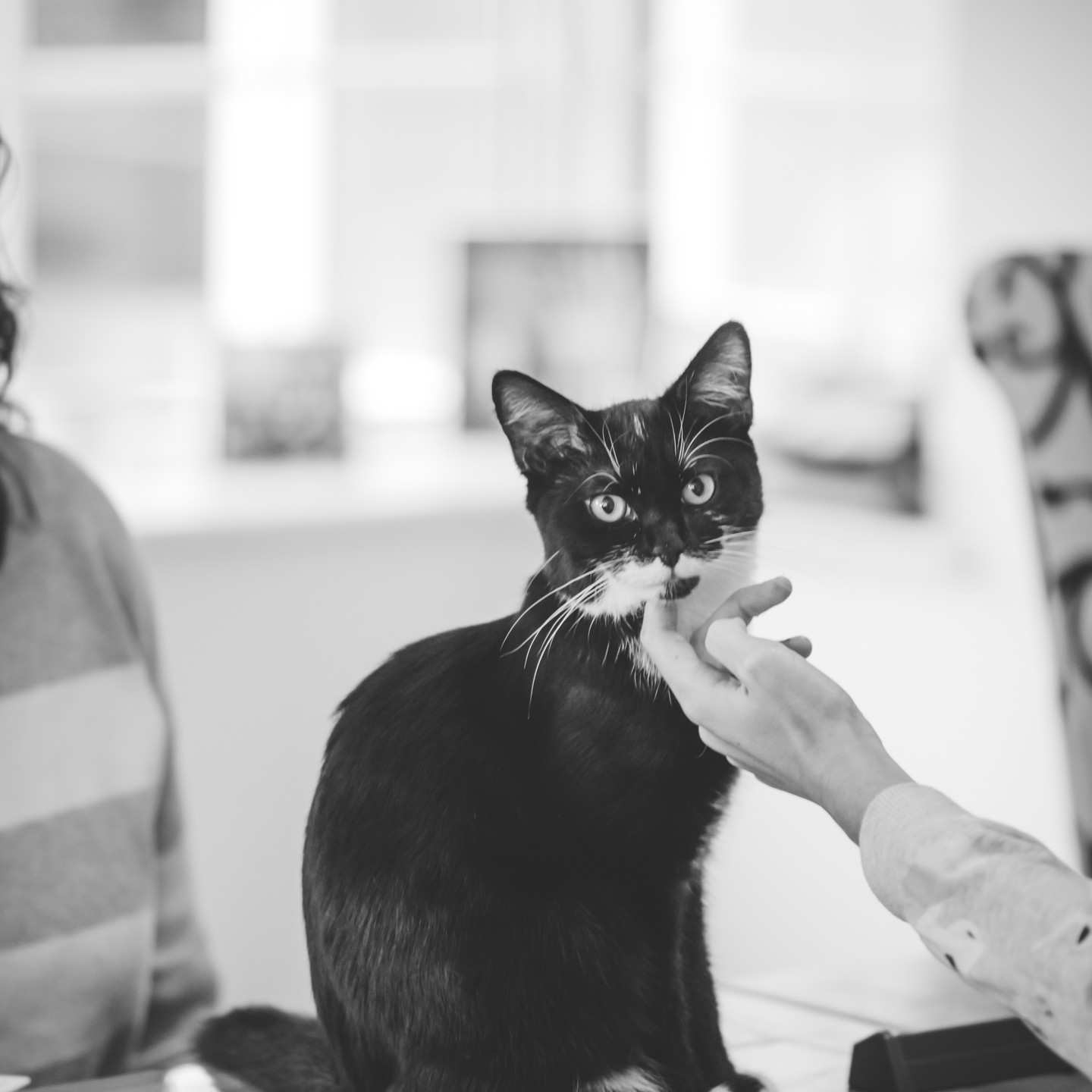 Pet Photographer Solihull, lifestyle photograph of a little cat being stocked