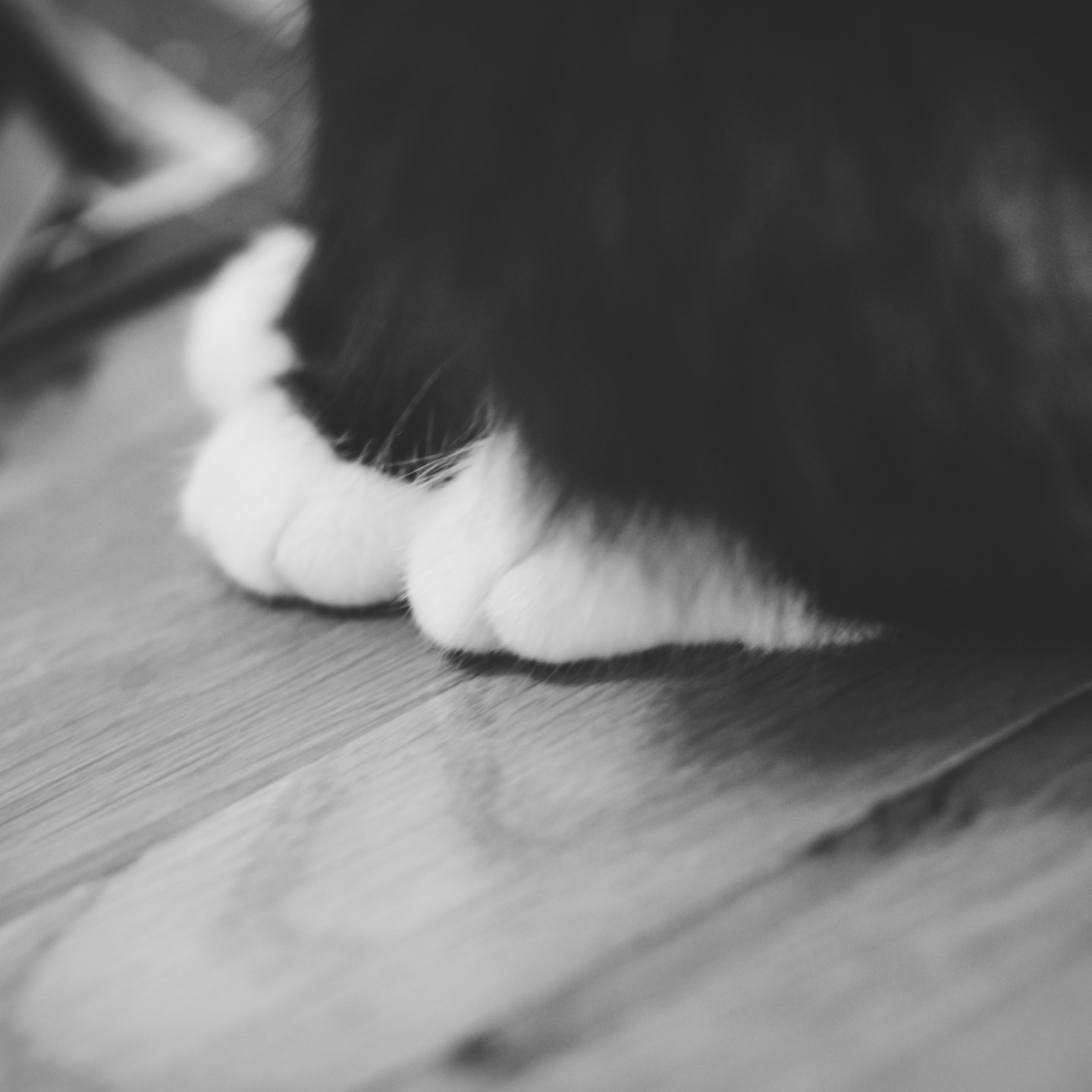 Pet Photographer Solihull, lifestyle photograph of a little cat, close up of her paws