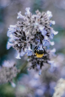 Hampton Manor Wedding Photographer Solihull, A close up image of a bee on some flowers at the venue