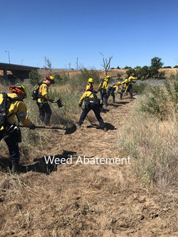 Weed Abatement2