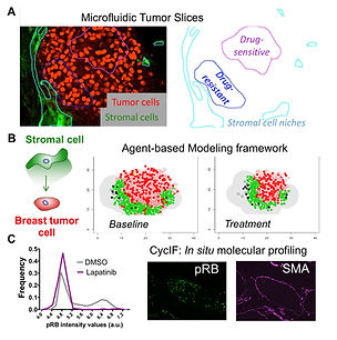 project1_tumorstroma_dose_response.jpg