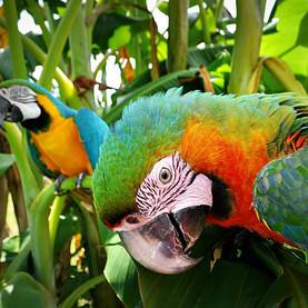Pretty Macaw 1.jpg
