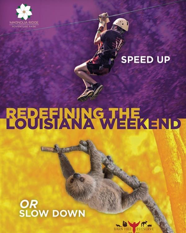 speed up or slow down.jpg