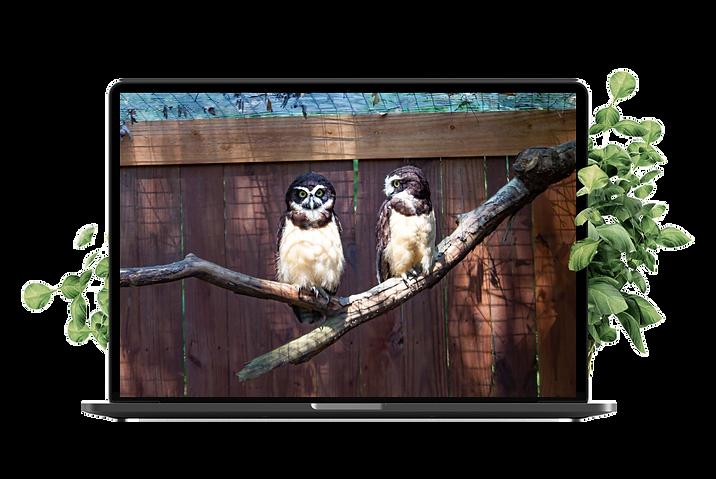 owl-laptop.png