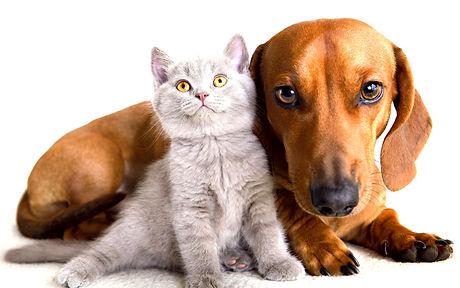 Cats_Dogs_Kittens_499344_3840x2400_edite