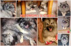 Solomon collage.jpg