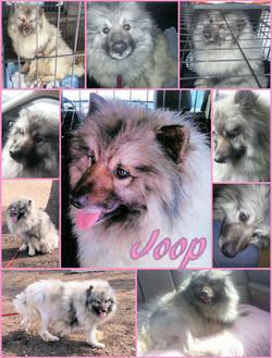 Joop collage.jpg