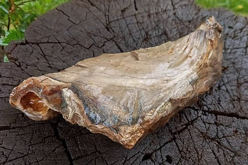 Oregon Petrified Wood