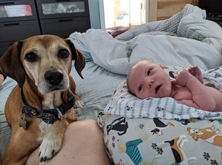 Forrest John's birth story as told by mom and dad, Ainsley & Dan. Welcome, little one! Born 6/20/19