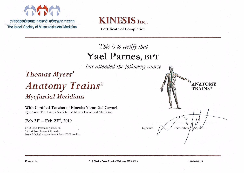 Anatomy Trains  - Myofacial Merians_edited