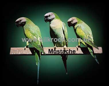 Mustache-7.jpg