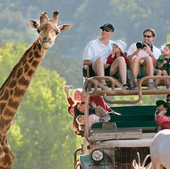 Family Safari Experience