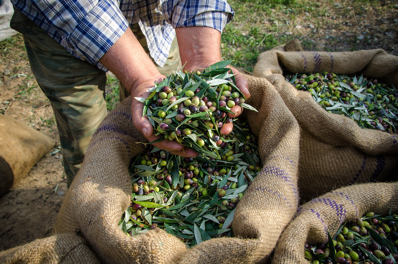 Uomo che tiene le olive