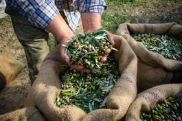 Dovážené speciality od malých farmářů