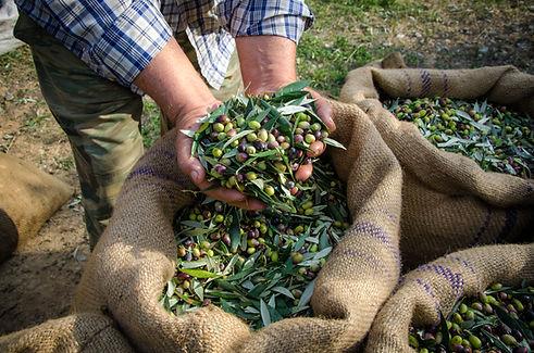 Man Holding Olives
