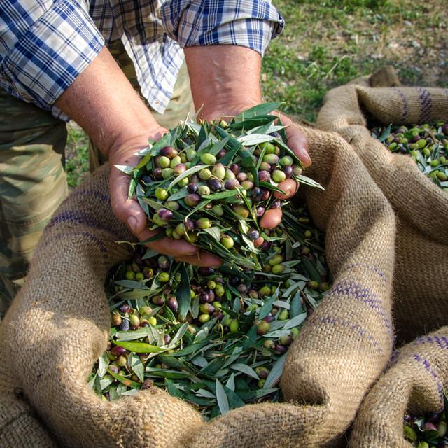 Organic olive oil, extra virgin olijfolie