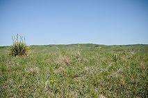 Sandhills_LCBr 01-041 18.jpg