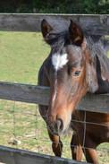 Foal 5 .jpg